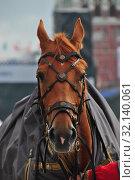 Купить «Лошадь Кавалерийского почетного эскорта Президентского полка», эксклюзивное фото № 32140061, снято 2 сентября 2014 г. (c) lana1501 / Фотобанк Лори