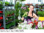 Купить «Female gardener holding pots while gardening with woman Cleome hassleriana in greenhouse», фото № 32140505, снято 4 июля 2020 г. (c) Яков Филимонов / Фотобанк Лори