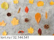 Купить «dry autumn leaves, rowanberries and pine cones», фото № 32144541, снято 25 октября 2018 г. (c) Syda Productions / Фотобанк Лори