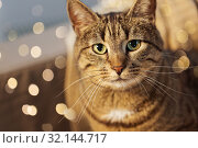 Купить «portrait of tabby cat at home», фото № 32144717, снято 15 ноября 2017 г. (c) Syda Productions / Фотобанк Лори