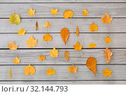 Купить «dry fallen autumn leaves on gray wooden boards», фото № 32144793, снято 25 октября 2018 г. (c) Syda Productions / Фотобанк Лори