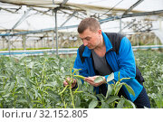 Farmer controlling process of growing of beans in glasshouse. Стоковое фото, фотограф Яков Филимонов / Фотобанк Лори