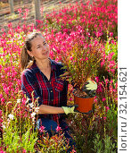 Florist woman working with potted flowers. Стоковое фото, фотограф Яков Филимонов / Фотобанк Лори
