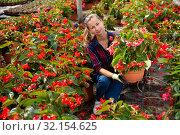 Купить «Female florist arranging potted begonias», фото № 32154625, снято 14 декабря 2019 г. (c) Яков Филимонов / Фотобанк Лори