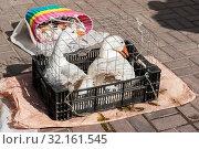 Купить «Белые гуси в клетке на рынке», эксклюзивное фото № 32161545, снято 4 сентября 2019 г. (c) Александр Щепин / Фотобанк Лори