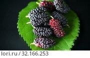 Mulberry berry with leaf isolated on black background. Стоковое видео, видеограф Peredniankina / Фотобанк Лори