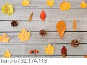Купить «dry autumn leaves, rowanberries and pine cones», фото № 32174113, снято 25 октября 2018 г. (c) Syda Productions / Фотобанк Лори
