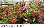 Купить «Young female florist arranging potted plants of flowering red begonias while gardening in glasshouse», видеоролик № 32176417, снято 3 июня 2019 г. (c) Яков Филимонов / Фотобанк Лори