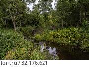 Купить «A small river among green dense trees and bushes», фото № 32176621, снято 24 августа 2019 г. (c) Валерий Смирнов / Фотобанк Лори