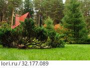 Купить «Decorative juniper on the lawn in front of the cottage», фото № 32177089, снято 9 сентября 2019 г. (c) Евгений Харитонов / Фотобанк Лори