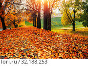 Купить «Autumn sunny landscape. Autumn park trees and fallen autumn leaves on the ground along the park alley», фото № 32188253, снято 18 октября 2018 г. (c) Зезелина Марина / Фотобанк Лори