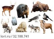 Купить «europe animals isolated», фото № 32188741, снято 17 октября 2019 г. (c) Яков Филимонов / Фотобанк Лори