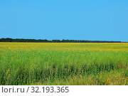 Купить «Close up field of green oil seed rape colza flowers under clear blue sky, high angle view», фото № 32193365, снято 20 ноября 2019 г. (c) easy Fotostock / Фотобанк Лори