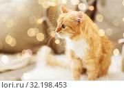 Купить «red tabby cat on sofa with sheepskin at home», фото № 32198453, снято 15 ноября 2017 г. (c) Syda Productions / Фотобанк Лори