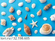 Купить «different sea shells on blue background», фото № 32198605, снято 20 ноября 2018 г. (c) Syda Productions / Фотобанк Лори