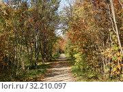 Осенняя алея (2019 год). Стоковое фото, фотограф Андрей Чабан / Фотобанк Лори