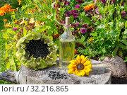 Бутылка с подсолнечным маслом, семечки и подсолнухи на старом пне в летнем саду. Стоковое фото, фотограф Елена Коромыслова / Фотобанк Лори