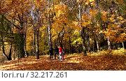 Купить «People walking in autumn park in sunny day», видеоролик № 32217261, снято 24 сентября 2019 г. (c) Наталья Волкова / Фотобанк Лори