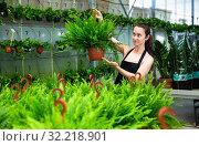 Купить «Young female gardener in apron working with fern in pots», фото № 32218901, снято 22 мая 2019 г. (c) Яков Филимонов / Фотобанк Лори
