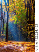 Купить «Sunny autumn in the foggy park», фото № 32224453, снято 15 октября 2018 г. (c) Sergey Borisov / Фотобанк Лори