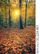 Купить «Bright autumn park at sunset», фото № 32224461, снято 13 октября 2018 г. (c) Sergey Borisov / Фотобанк Лори