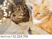 Купить «two cats lying with blanket at home», фото № 32224705, снято 15 ноября 2017 г. (c) Syda Productions / Фотобанк Лори