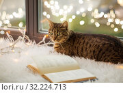 Купить «tabby cat lying on window sill with book at home», фото № 32224713, снято 15 ноября 2017 г. (c) Syda Productions / Фотобанк Лори