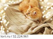 Купить «red tabby cat lying on blanket at home in winter», фото № 32224961, снято 15 ноября 2017 г. (c) Syda Productions / Фотобанк Лори
