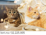 Купить «two cats lying on sofa at home», фото № 32225005, снято 15 ноября 2017 г. (c) Syda Productions / Фотобанк Лори