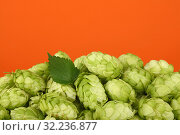Close up heap of fresh green hops with copy space. Стоковое фото, фотограф Anton Eine / Фотобанк Лори