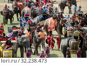 Elephants at the Elaphant Show in the Stadium at the traditional Elephant Round Up Festival in the city of Surin in Isan in Thailand. Thailand, Isan, Surin, November, 2017. Стоковое фото, фотограф Zoonar.com/URS FLUEELER / age Fotostock / Фотобанк Лори