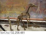 Скелет динозавра зауролофа (2019 год). Редакционное фото, фотограф Носов Руслан / Фотобанк Лори