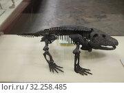 Скелет диссоровидной амфибии камакопса (2019 год). Редакционное фото, фотограф Носов Руслан / Фотобанк Лори