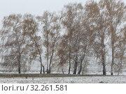 Купить «Пейзаж с первым снегопадом, Московская область», эксклюзивное фото № 32261581, снято 6 октября 2019 г. (c) Дмитрий Неумоин / Фотобанк Лори