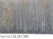 Купить «Берёзовая роща в снегопад осенью», эксклюзивное фото № 32261585, снято 6 октября 2019 г. (c) Дмитрий Неумоин / Фотобанк Лори