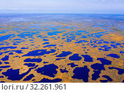 Autumn landscape. West Siberian Plain. Aerial view. Стоковое фото, фотограф Икан Леонид / Фотобанк Лори
