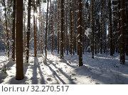 Купить «Зимний лес с пробивающимися сквозь стволы деревьев лучами солнца», фото № 32270517, снято 14 февраля 2018 г. (c) Елена Коромыслова / Фотобанк Лори