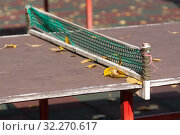 Купить «Желтые опавшие листья лежат на столе для настольного тенниса у сетки. Крупный план», фото № 32270617, снято 8 октября 2019 г. (c) Наталья Николаева / Фотобанк Лори