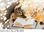 Купить «two cats lying on sofa with book at home», фото № 32278929, снято 15 ноября 2017 г. (c) Syda Productions / Фотобанк Лори