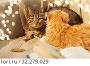 Купить «two cats lying on sofa at home», фото № 32279029, снято 15 ноября 2017 г. (c) Syda Productions / Фотобанк Лори