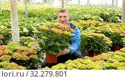 Купить «Positive man farmer working with Hydrangea plants while gardening in glasshouse», видеоролик № 32279801, снято 26 апреля 2019 г. (c) Яков Филимонов / Фотобанк Лори