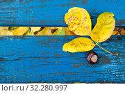 Купить «Осенний фон с желтым опавшим листом на винтажной бирюзовой лавочке. Ретро текстура деревянной доски.», фото № 32280997, снято 8 октября 2019 г. (c) Дорощенко Элла / Фотобанк Лори