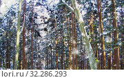 Купить «snowing in winter forest in japan», видеоролик № 32286293, снято 13 ноября 2019 г. (c) Syda Productions / Фотобанк Лори