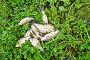 Купить «Свежевыловленная рыба лежит на зеленой траве», фото № 32304277, снято 19 августа 2019 г. (c) Екатерина Овсянникова / Фотобанк Лори