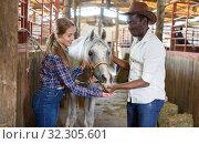 Купить «Farm workers feeding horses with grain», фото № 32305601, снято 2 октября 2018 г. (c) Яков Филимонов / Фотобанк Лори