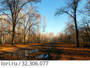 Autumn landscape, nature, walk in the park outdoors. Dirty road in the woods among trees and fallen yellow and golden foliage in fine weather in October and November against a blue sky. Стоковое фото, фотограф Светлана Евграфова / Фотобанк Лори