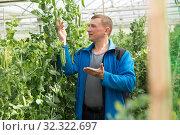Купить «Man gardener during harvesting with pea and soy seedlings», фото № 32322697, снято 9 апреля 2019 г. (c) Яков Филимонов / Фотобанк Лори