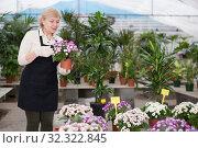 Купить «Adult woman is taking care of blooming flowers on her work place», фото № 32322845, снято 23 февраля 2018 г. (c) Яков Филимонов / Фотобанк Лори