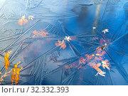 Купить «Colorful autumn leaves frozen in ice», фото № 32332393, снято 14 октября 2018 г. (c) Икан Леонид / Фотобанк Лори