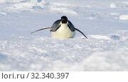 Emperor Penguins on the snow n Antarctica. Стоковое видео, видеограф Vladimir / Фотобанк Лори